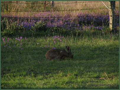 and the hare's delight